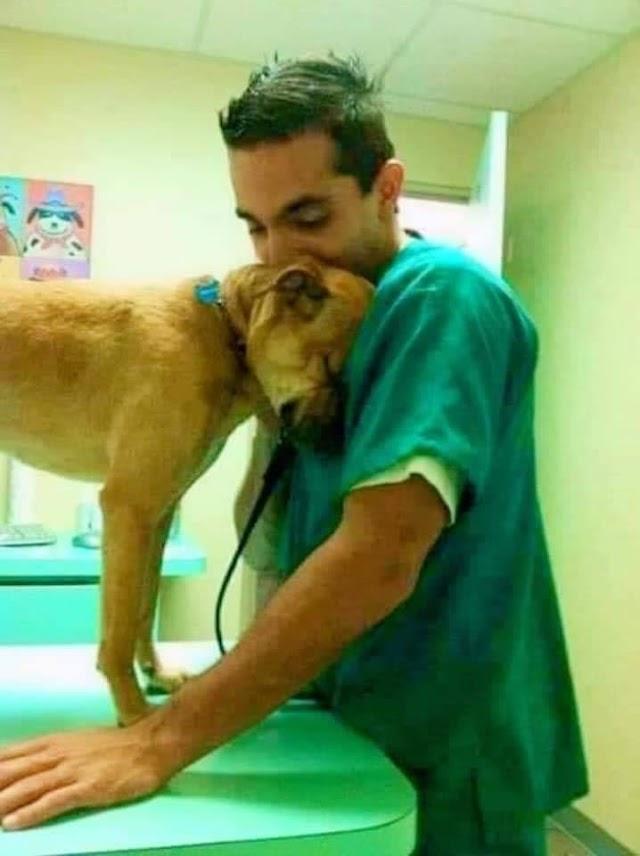 Ο αισθηματίας σκύλος Πλούτος και ο γιατρός της Αγάπης