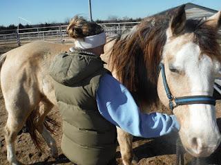 Tying up can look like colic, symptomatic P1 horse, symptomatic heterzygous PSSM 1 horse