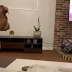 Dog cries over the sad scene from 'Lion King' movie went viral