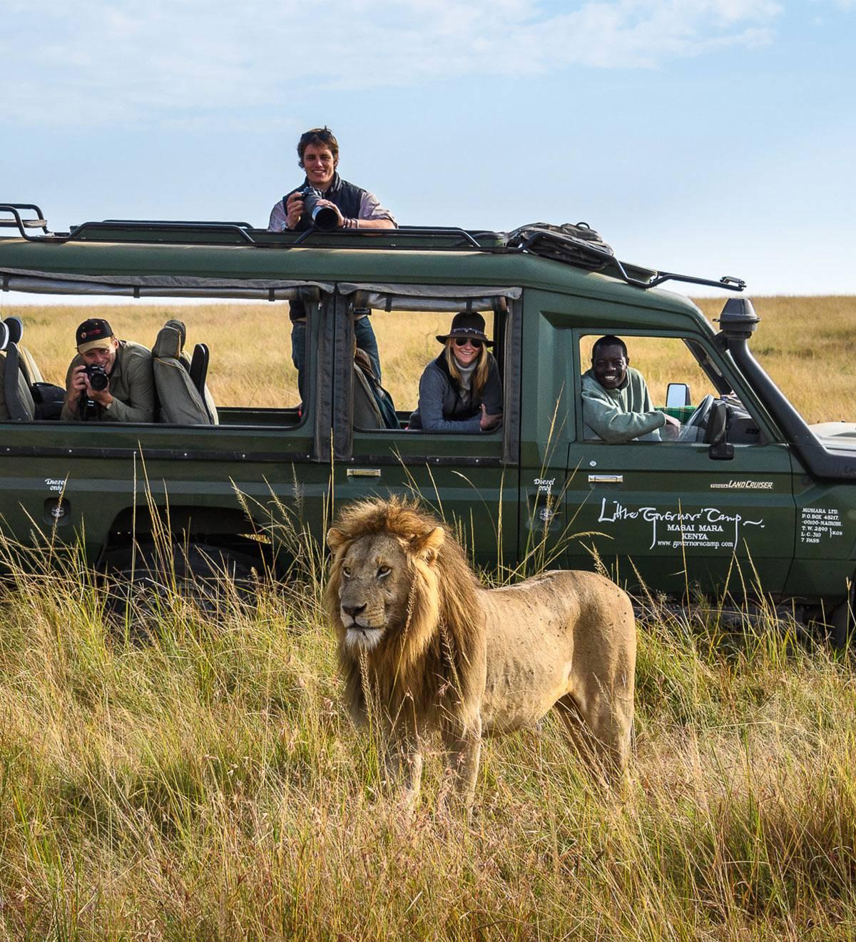 safari para ver leones