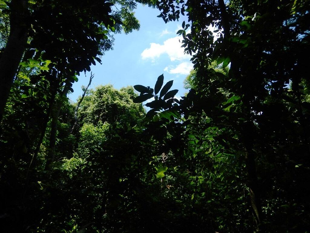 Bosque da Freguesia Jacarepaguá