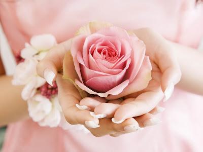 rose in hands normal resolution hd wallpaper