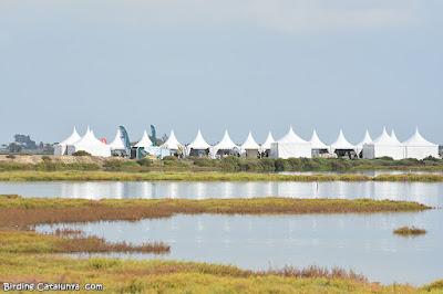 Delta Birding Festival 2021