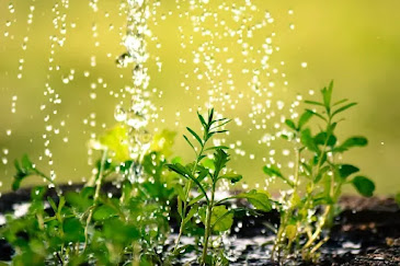 Water cascading down onto green plants in the ground.