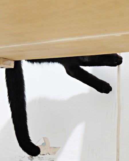 Pengalaman Merawat Kucing Muntah Berwarna Kuning dan Diare