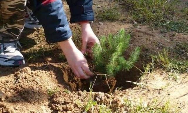 Το φύτεμα νέων δέντρων θα αυξήσει τις καλοκαιρινές βροχές στη νότια Ευρώπη