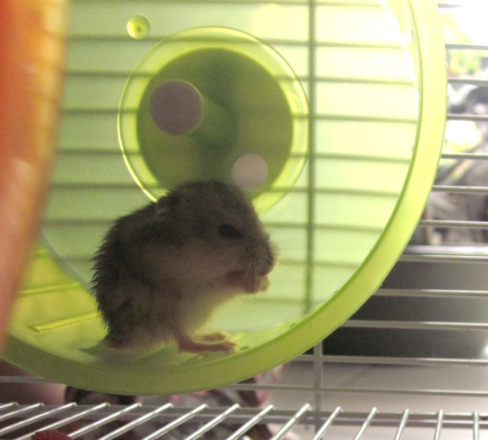 Jessica Seriani Hamster Yang Aneh