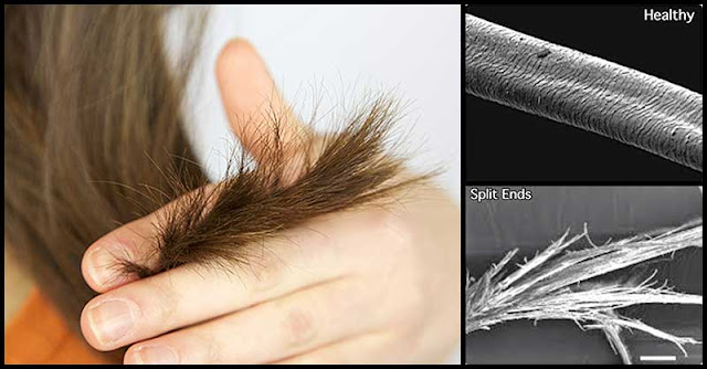 Natural Remedies That May Us Help Deal With Split Ends
