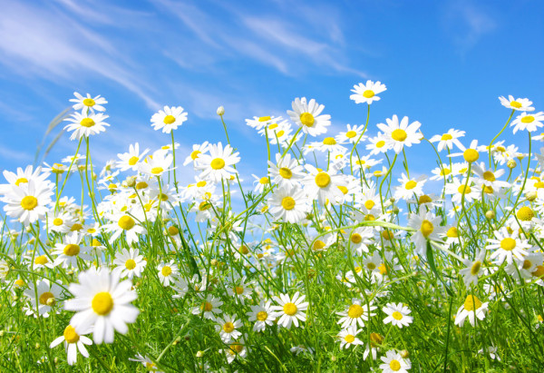 PUNTXET Hello Spring!!!!!
