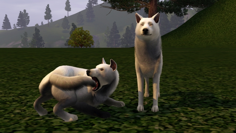 Zoth-Hunde2.jpg