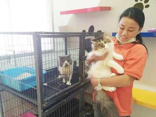 Bisnis penitipan kucing