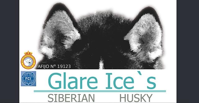 Portada Web Glare Ice´s Siberians