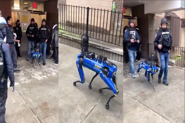 شرطة نيويورك تتخلى عن روبوت بوسطن دينامكس