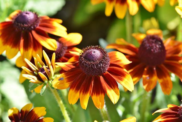 Plantas medicinales que incrementan las defensas