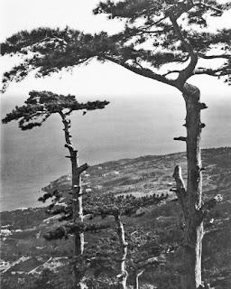В горах над Алупкой, 1910. Фото: Василий Сокорнов