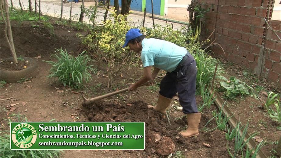 preparación de suelo con pico