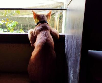 Kucing menyendiri