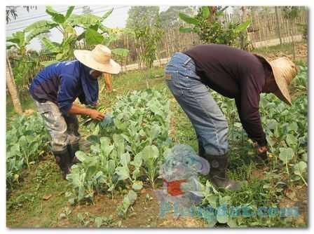 berkebun merupakan wirausaha ekonomi informal