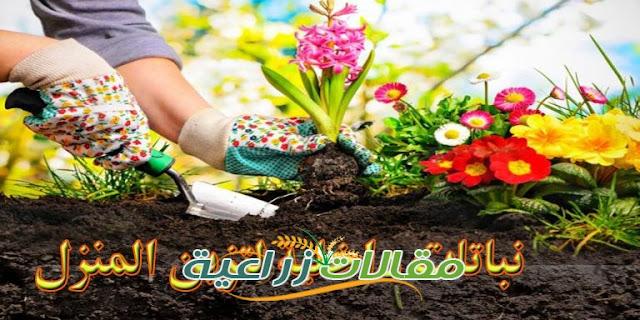 كيفية زراعة نباتات الزينة الداخلية فى المنزل والمكاتب وانواعها  - مقالات زراعية