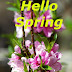 Top 10 Hello Spring Images greating Pictures,Photos for Whatsapp