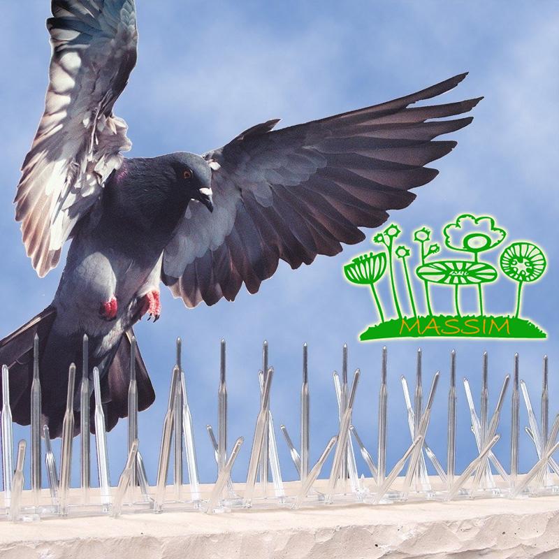 Empresa de control de aves en Valladolid
