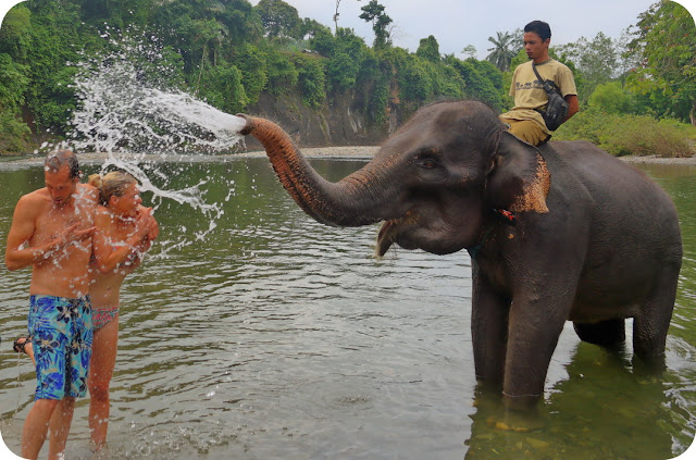 Mandi Bareng Gajah Di Sungai Batang Serangan Tangkahan