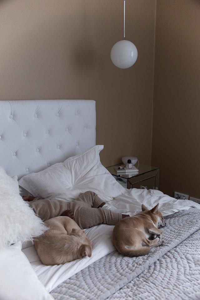 perhe, äitiys, makuuhuone, sisustus, chihuahua