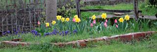 Beautiful spring sight