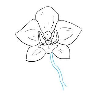 رسم زهرة الأوركيد بسهولة