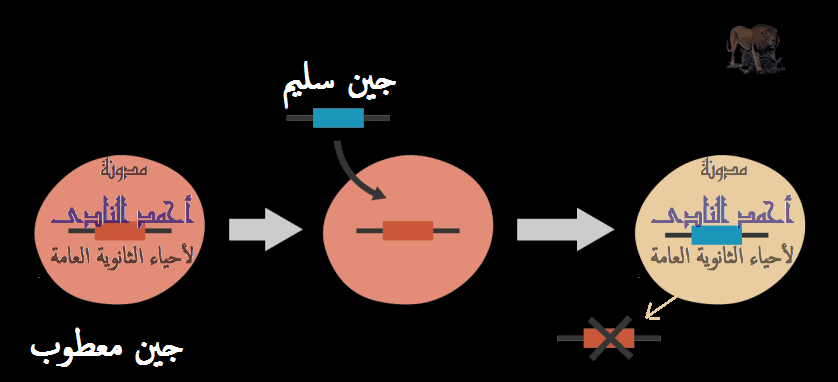الجينوم البشرى - العلاج بالجينات- مدونة أحمد النادى لأحياء الثانوية العامة