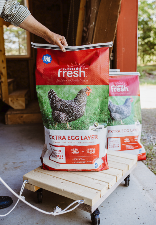 Guidelines for Feeding Baby Chicks | Fresh Eggs Daily®