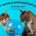 Cat World Domination Day 2021