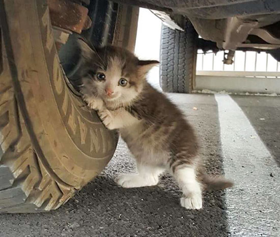 Картинки по запросу ลูก แมว ขี้ กลัว