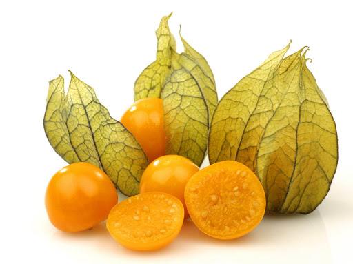 mengenal manfaat dan kandungan gizi buah ciplukan