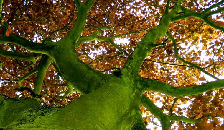 Green : Wordless Wednesday Blog Hop