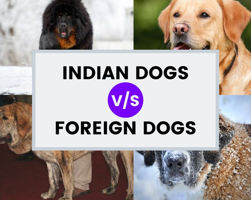 Indian dogs vs foreign dogs poster