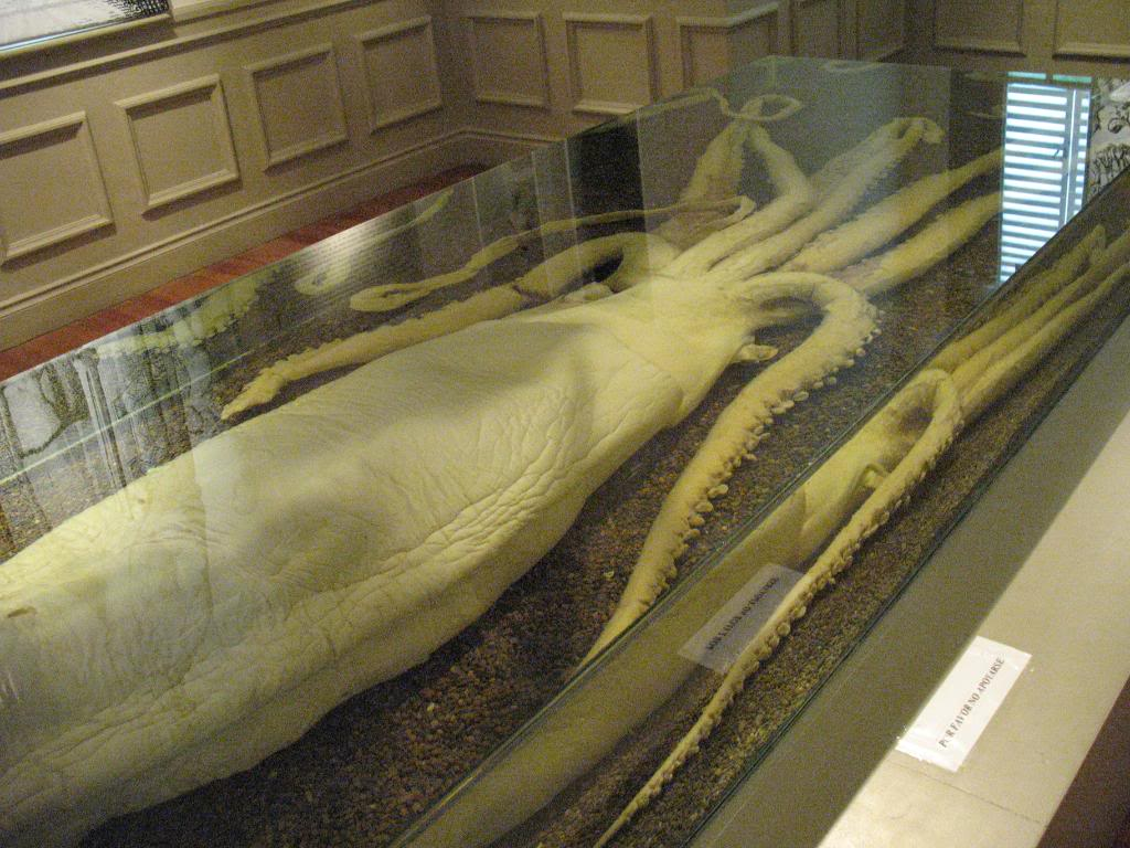 Preserved squid.