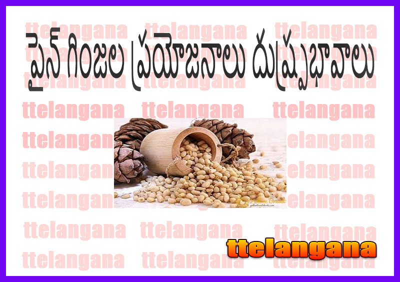 పైన్ గింజల ప్రయోజనాలు దుష్ప్రభావాలు