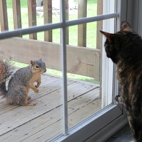 Estelle and Tuck the Squirrel