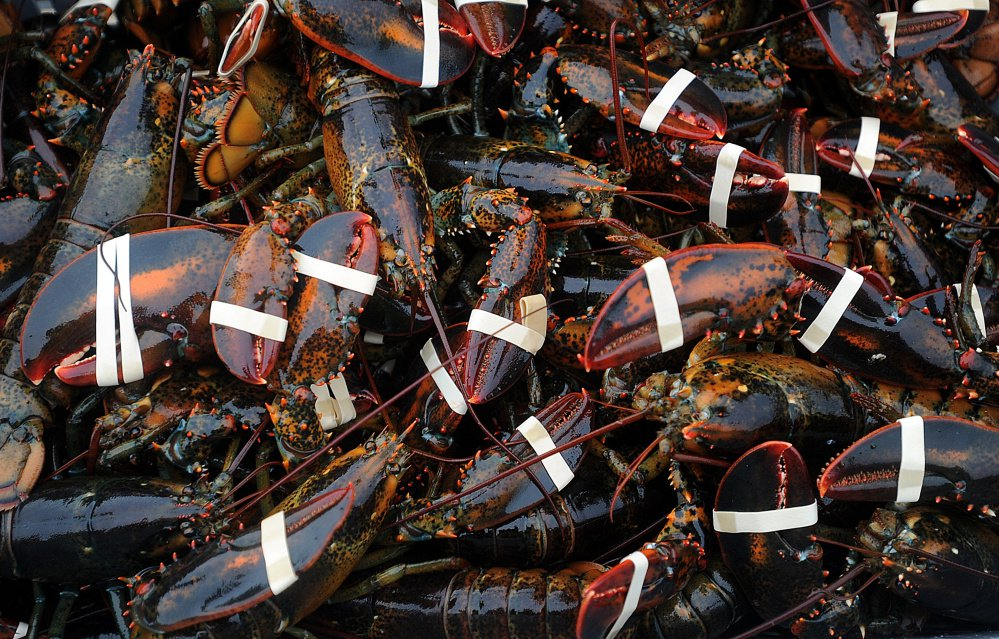 maine lobster assesment Abstract a long series of catch and effort data was available for assessment of the impact of fishing on the american lobster (homarus americanus) population off the.