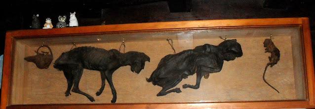 Gatos secos que estaban emparedados.