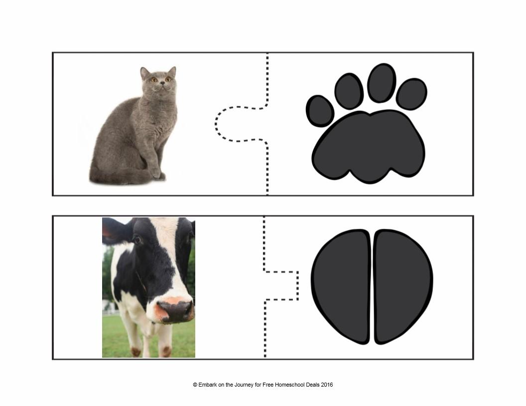 تعليم الاطفال اشكال اقدام بعض الحيوانات فى بطاقات مميزة بصورة اقدام الحيوانات وشكل الحيوانات