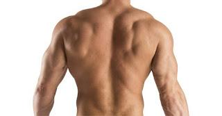 membentuk otot punggung