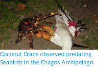 https://sciencythoughts.blogspot.com/2017/11/coconut-crabs-observed-predating.html