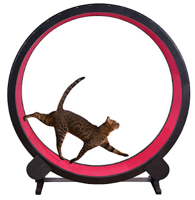 Feline exercise wheel for cats