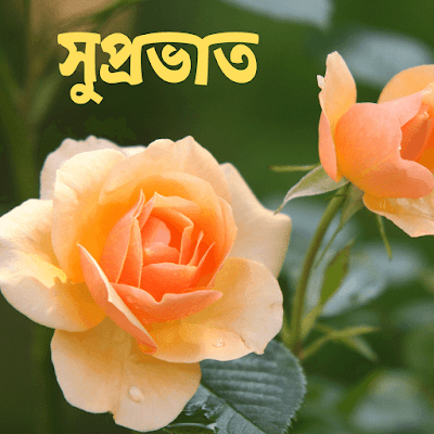 Bengali good morning images hd
