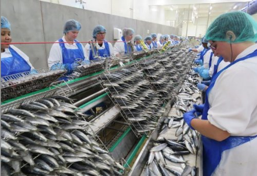 RO71mn worth of fish products project to be set up in Duqm