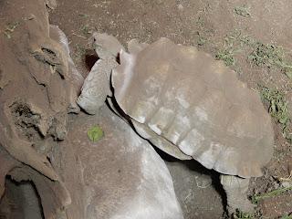 ジェノヴァ水族館のリクガメ