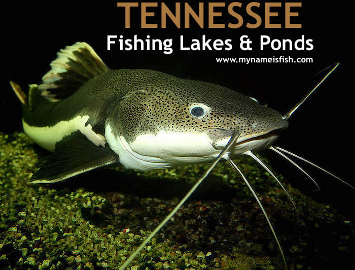 Tennessee Fishing Lakes