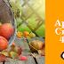 Apple Crisp 4x4